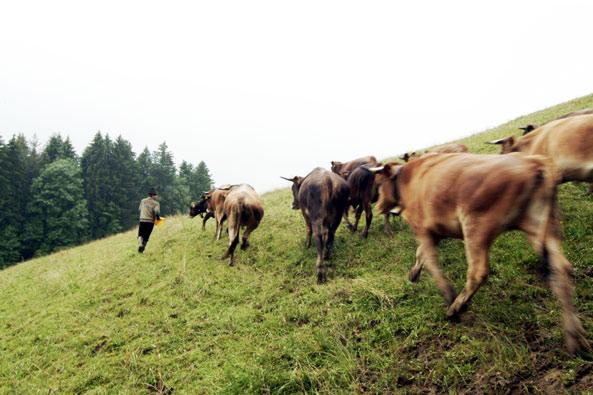 start_2011-murnauwerdenfelser_593.jpg