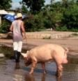 aktuelles-aktuelles_2013-animal-domestique-cubain112.jpg