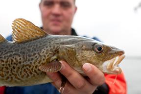 aktuelles-aktuelles_2014-fisherman-holding-cod-germa.jpg