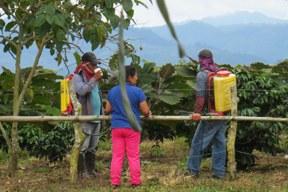 aktuelles-aktuelles_2014-glyphosat_kolumbien_288.jpg