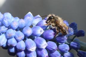 aktuelles-aktuelles_2015-aldi_insektengift_1_288.jpg