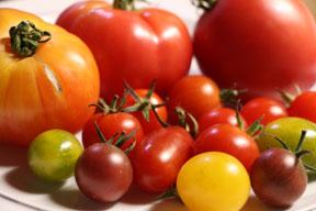 aktuelles-aktuelles_2016-tomaten_vielfalt_margret_artzt_288.jpg