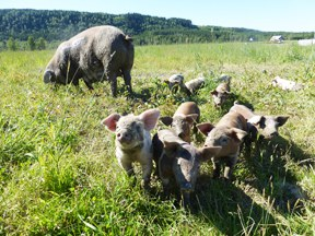 aktuelles-aktuelles_2016-biofreilandschweine_288.jpg