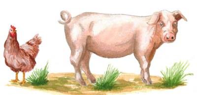 95 Thesen für Kopf und Bauch: Tiere