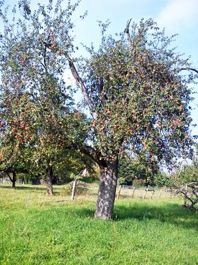 arche-luikenb-heimerd-fruchtbehang-1_288.jpg