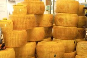 Cheese 2017: Rohmilch im Zentrum einer internationalen Debatte