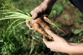 Lebensmittelverschwendung: Ziviler Appell an EU