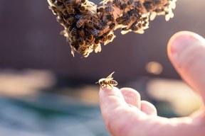 Bienen-Aktionstag: Weil Bienenschutz über die Zukunft von Mensch, Tier und Umwelt entscheidet