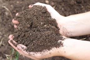 Bodentag 2018: Gesunder Boden, gesunde Lebensmittel