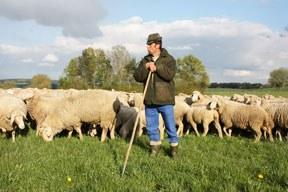 Demo: Rettet die Schafhaltung!