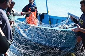 Entscheidung über Ostsee-Fanggrenzen 2019:  Noch immer keine vollständig nachhaltige Nutzung der Nahrungsquelle Meer