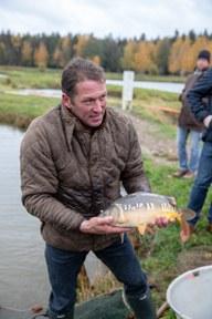 """Fischgenuss: """"Karpfen erfüllen alle Ansprüche moderner Verbraucher."""""""