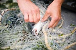 Fish Dependence Day 2018: Meere weiterhin überfischt
