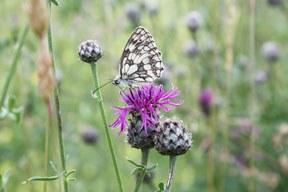 Insektensterben: Der stumme Frühling?