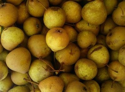Palmischbirne: Neuer Arche-Passagier trägt Früchte