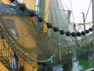 Entscheidung über Fanggrenzen 2019 für Nordostatlantik und Nordsee: schlechte Aussichten für Kabeljau, Hering und Makrele