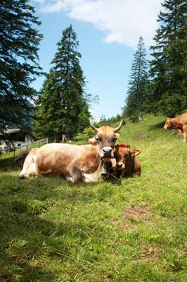 Slow Food fordert EU zum Umbau der Tierhaltung auf