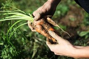 Slow Food fordert Nachbesserung des Reformvorschlags zur Gemeinsamen EU-Agrarpolitik