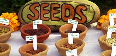 Unser Saatgut: Über 90 Prozent aller Sorten sind in den letzten 100 Jahren verschwunden
