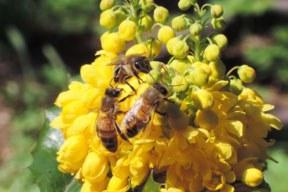 Weltbienentag: Was Bienen wirklich hilft!