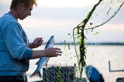 2019 - Das Jahr des Fischs in der Europäischen Union