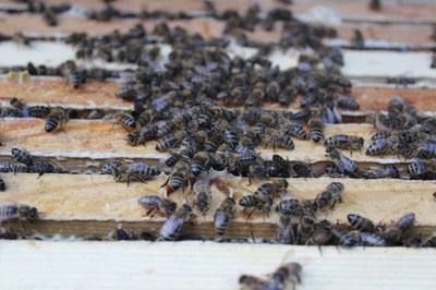 Baden-Württemberg: Großer Erfolg für Trägerkreis des Bienen-Volksbegehren