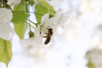 """Biodiversitätsschutz: Warum wir das Volksbegehren """"Rettet die Bienen"""" unterstützen"""