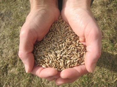 Bundesregierung muss Potenzial von Agrarökologie nutzen