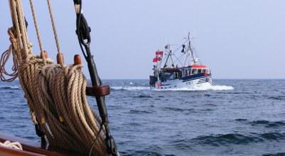 Ostsee-Fanggrenzen 2020: Vollständige Nachhaltigkeit aller Fischbestände trotz drastischer Quotenkürzungen verfehlt