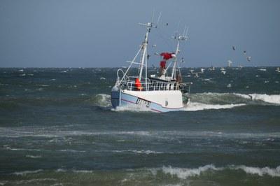 Europäische Fischerei: Fangverbot für Dorsch
