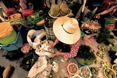 Neue Studie: Öko-Landbau unverzichtbar für UN-Ziele für nachhaltige Entwicklung