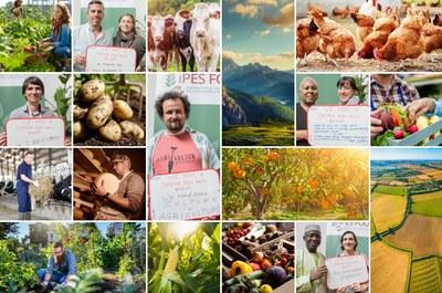 Neuer IPES Bericht: Hin zu einer Gemeinsamen Lebensmittelpolitik für Europa