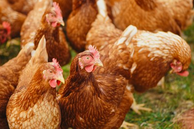 Tierhaltung in Deutschland: Antibiotika ohne Ende?
