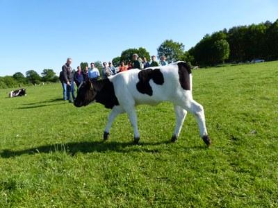 Weltmilchtag: Was zeichnet eine gute Milch aus?