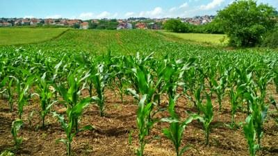 Ackerlandvergabe: Erstmals gemeinwohlorientierte Vergabekriterien von öffentlichem Land