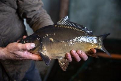 Am Beispiel Fisch: Mehr Mut zur Vielfalt!