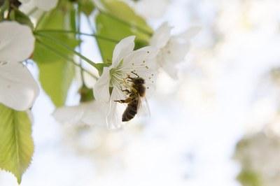 Ernährungssicherung: Bienenschutz muss höchste Priorität haben