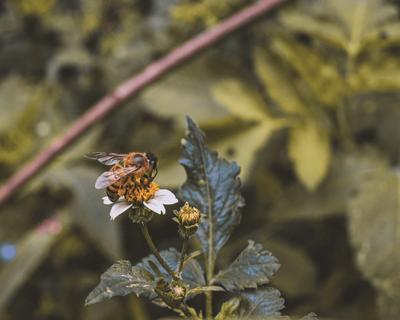 Die (Wild-)Biene: Was zeichnet sie aus und wie können wir ihr helfen?