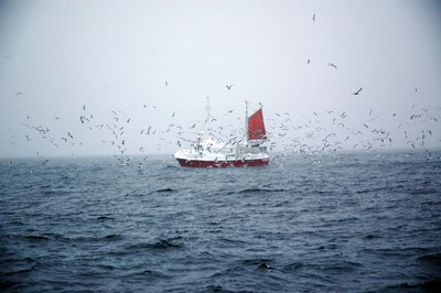 End of Fish Day 2020: Zukunftsfähiges Fischereimanagement unausweichlich