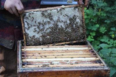 EU-Biodiversitätsstrategie 2030: Bienen- und Insektenschutz muss höchste Priorität haben