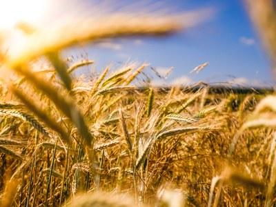 EU-Farm to Fork Strategie: Die wichtigsten Infos auf einen Blick
