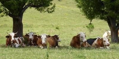 Gemeinsame EU-Agrarpolitik: Potenziale umsetzen – jetzt!