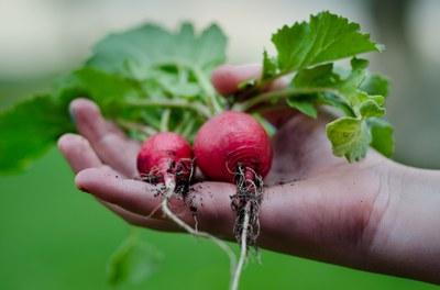 Rezept-Tipps aus dem Netzwerk: Frühlingssalat vom Radieschen, Rettich und Kohlrabi mit Kürbiskernen