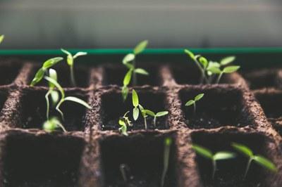 Ernährungsbildung: Slow Food Deutschland startet neues Projekt mit Lerngarten in Kreisau/Polen
