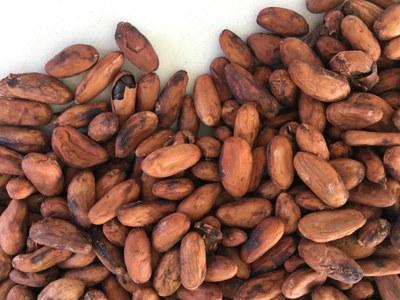Kakaobohnen (c) Paul Kleebinder.jpeg