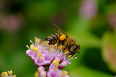 Bienen retten, aber richtig