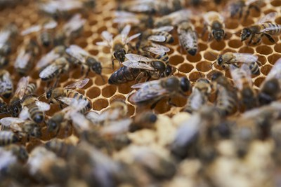 Die Biene, unser Essen und das Klima: So steht es um die Artenvielfalt