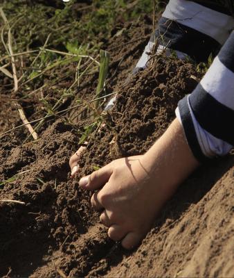 EU-Konsultationen zur Bodenschutzstrategie - Die Zeit ist reif für Agrarökologie!