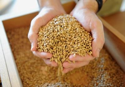 Getreide fest und flüssig: Brot und Bier Online-Verkostung