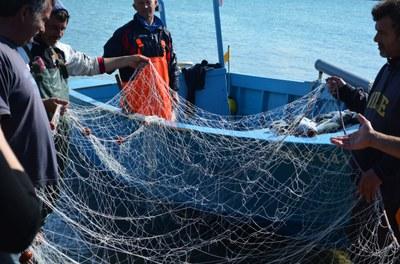 """Klimakrise bedroht die Fischerei - """"End of Fish Day"""" jetzt schon im März"""